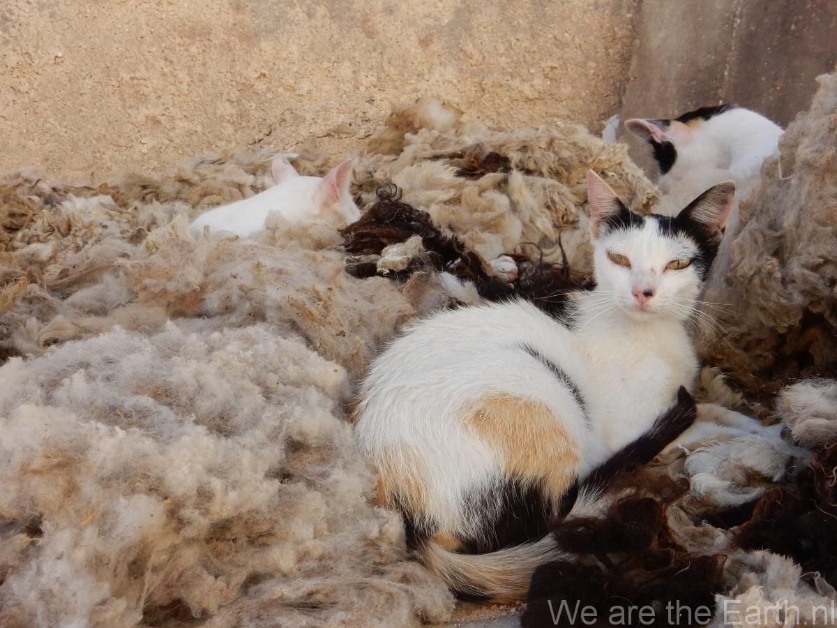 Katten bij de leerlooierij in Tétaouan